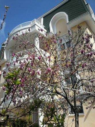 Dom za stare i magnolija u rano proleće