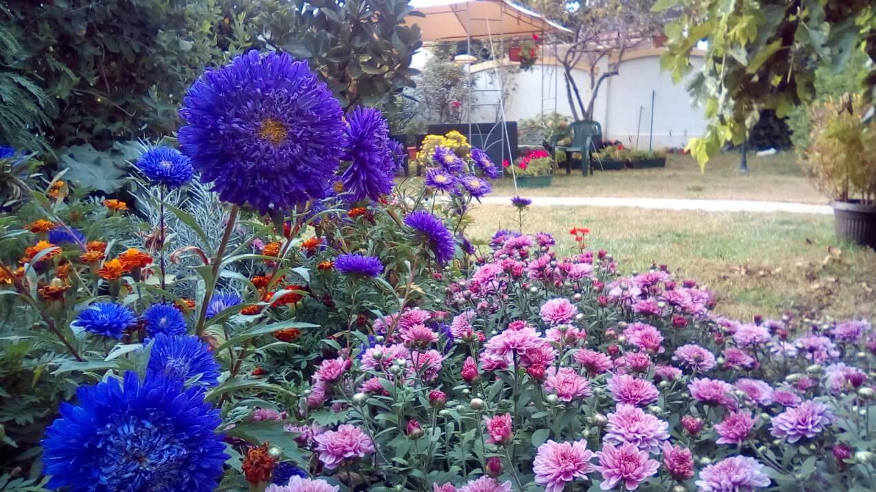 dom za stare dvorište u jesen
