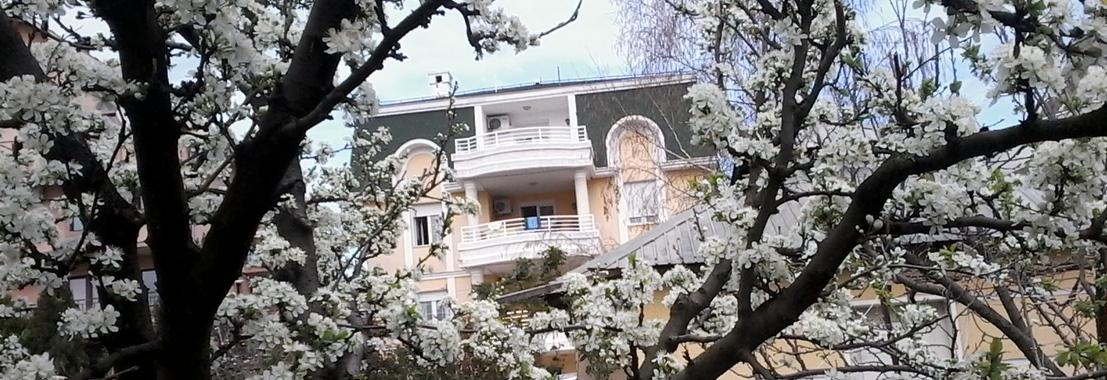 Dom za stare Palma sa šljivom u cvatu